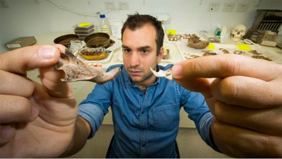 Giant-rat-fossil