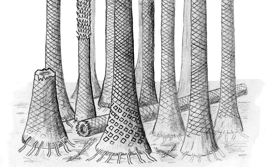 Fossilized-forest-Norway