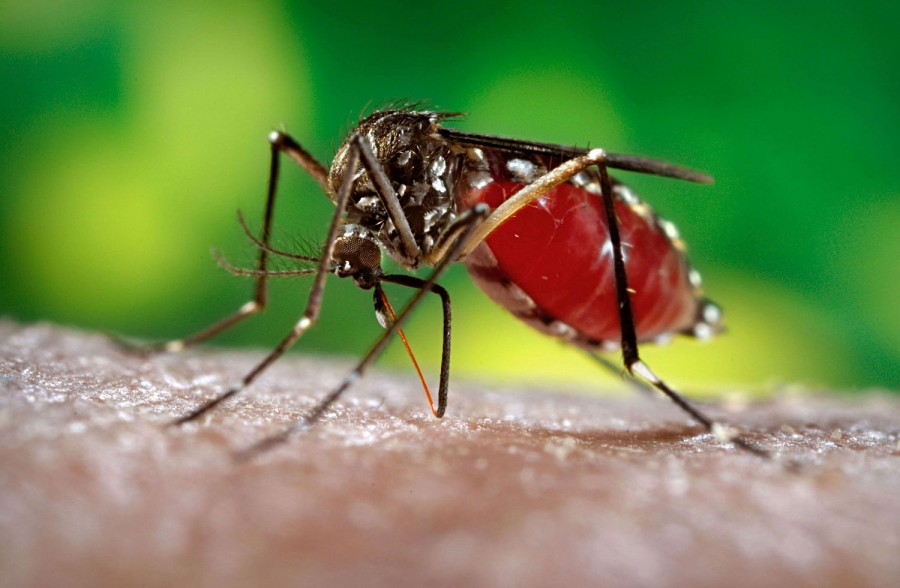 The name chikungunya comes from Tanzania, where the disease was first identified in 1952. Credit: Nutrition Review.