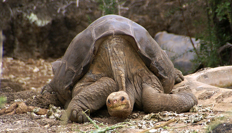 lonesome-george-galapagos