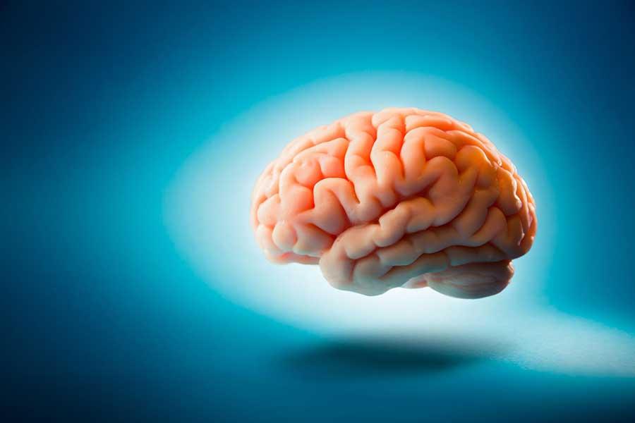 cryogenics-rabbit-brain