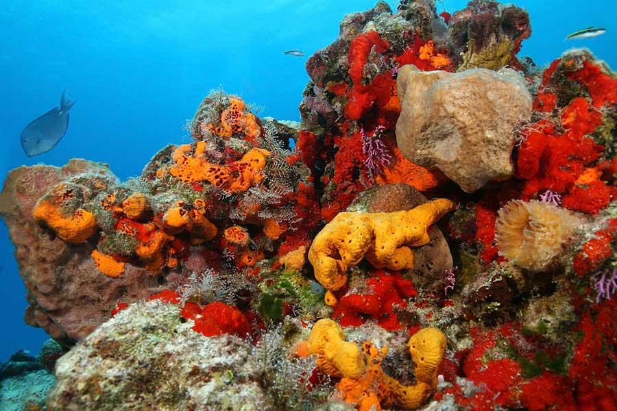 Sea_Sponges_Under-life