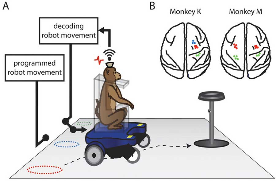 monkey-brain-Machine-Interface
