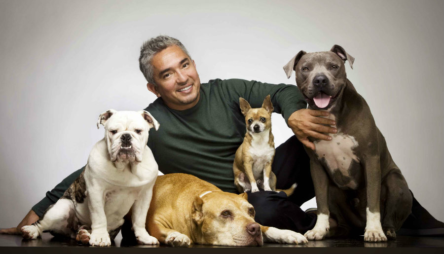 Cesar Millan, famous for rehabilitating troubling dogs, is under investigation for animal cruelty. Photo credit: Tiempo