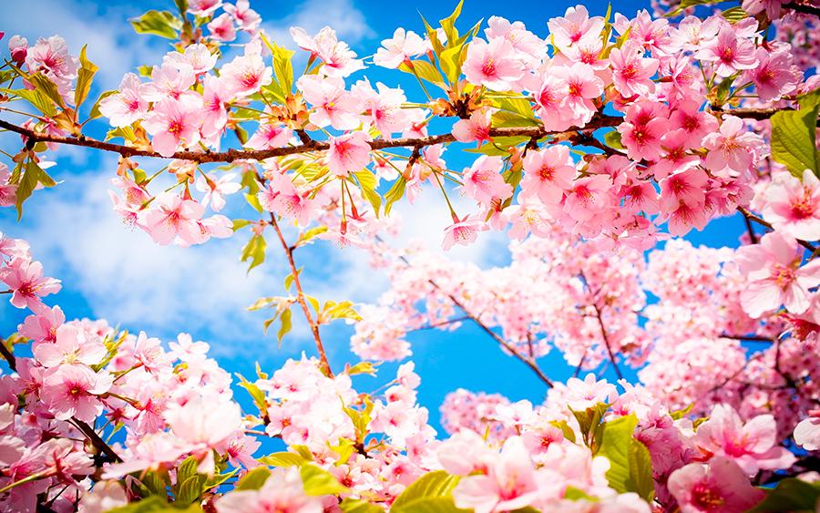 the spring season