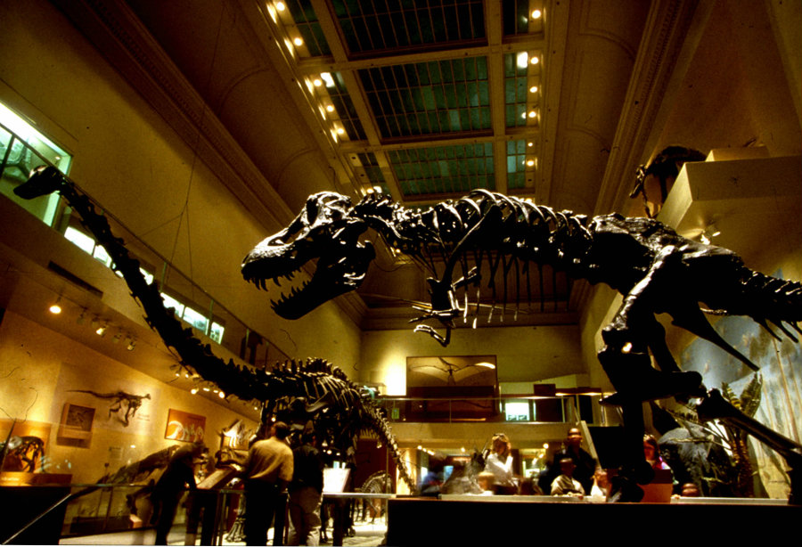 On March 14th, the Smithsonian museum published a press release explaining the meanings of dinosaur fossils discovered from  the year 1997 through 2006. Photo credit: News Desk