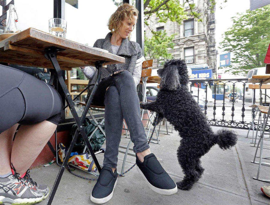 Dogs will be soon welcomed at restaurants with outdoor tables in New York City. Photo credit: Richard Drew / NBC News