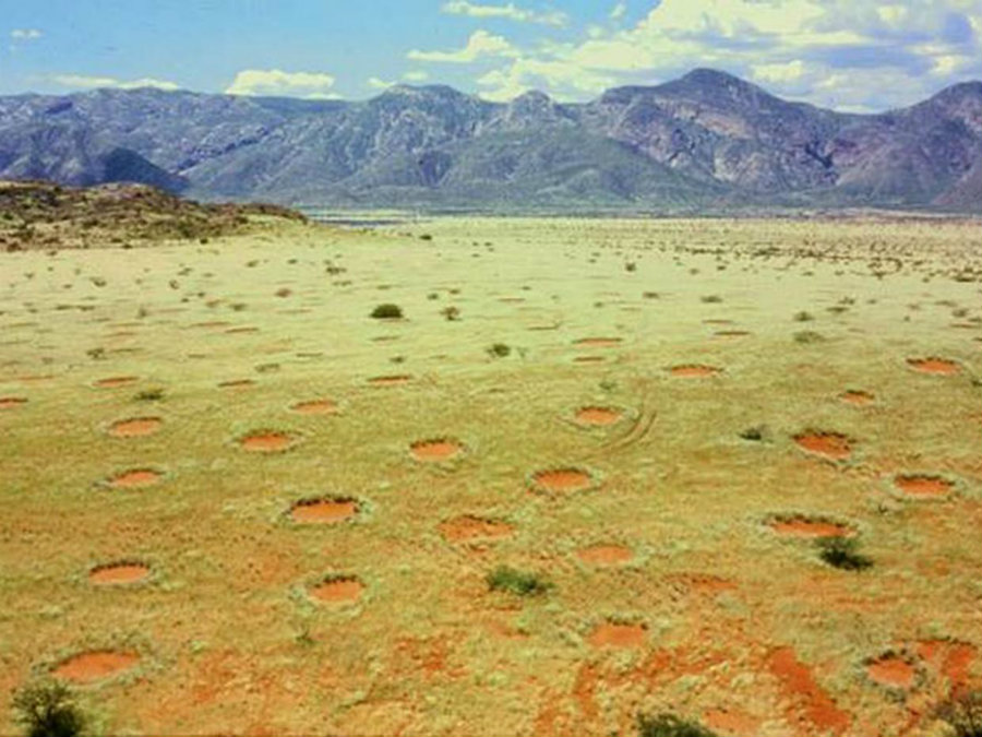 Recently, the mysterious barren patches known as fairy circles were discovered in Australia and it could lead researchers to determine to actual causes for them to appear on Australian land. Photo credit: Thorsten Becker / Independent