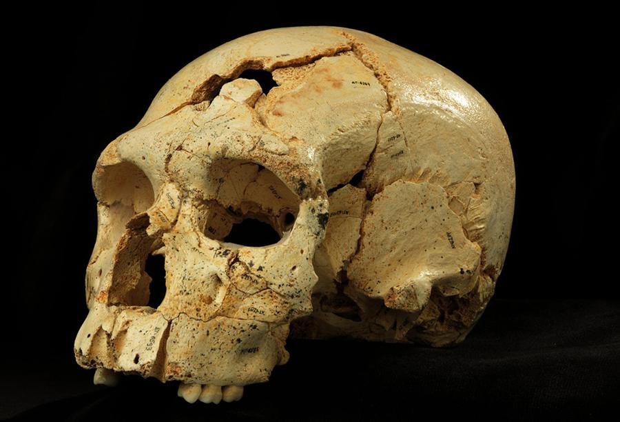 Sima-hominin-skull