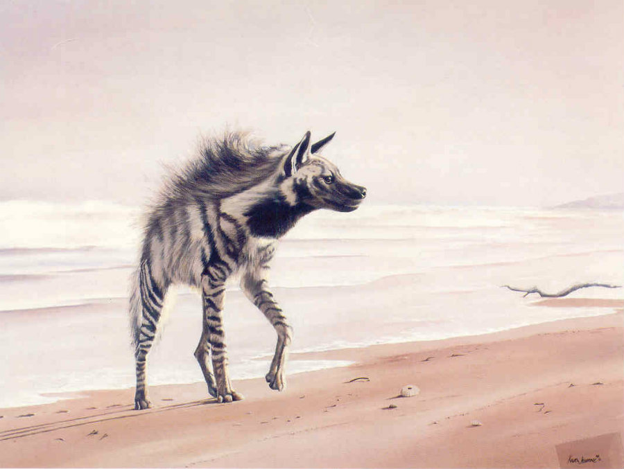 Researchers have reported sightings of striped hyenas roaming amid packs of grey wolves in the Negev desert. Illustrator: Karen Laurence