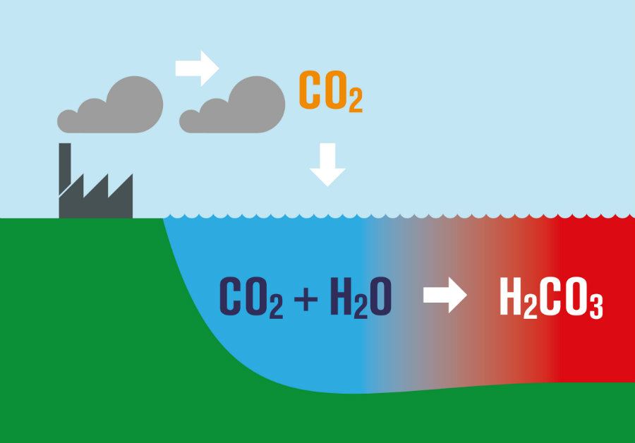 The ocean is starting to need more carbon dioxide, therefore, the water is becoming more acidic. Photo credit: Tes