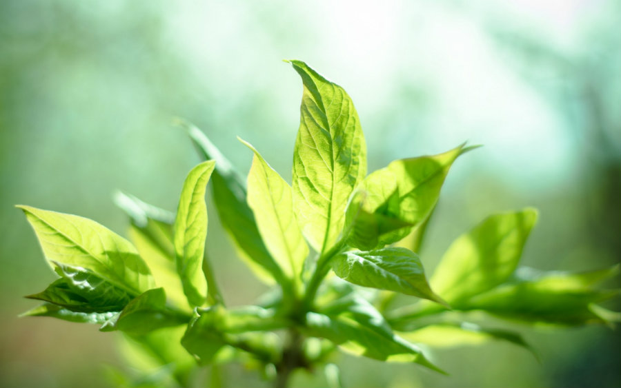 Danish researchers discovered a new source of energy that comes from a reversed photosynthesis process. Photo credit: Yale Scientific