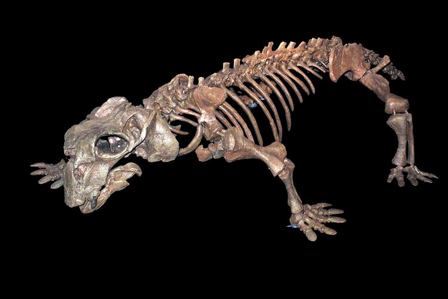 Lystrosaurus-life-expectancy