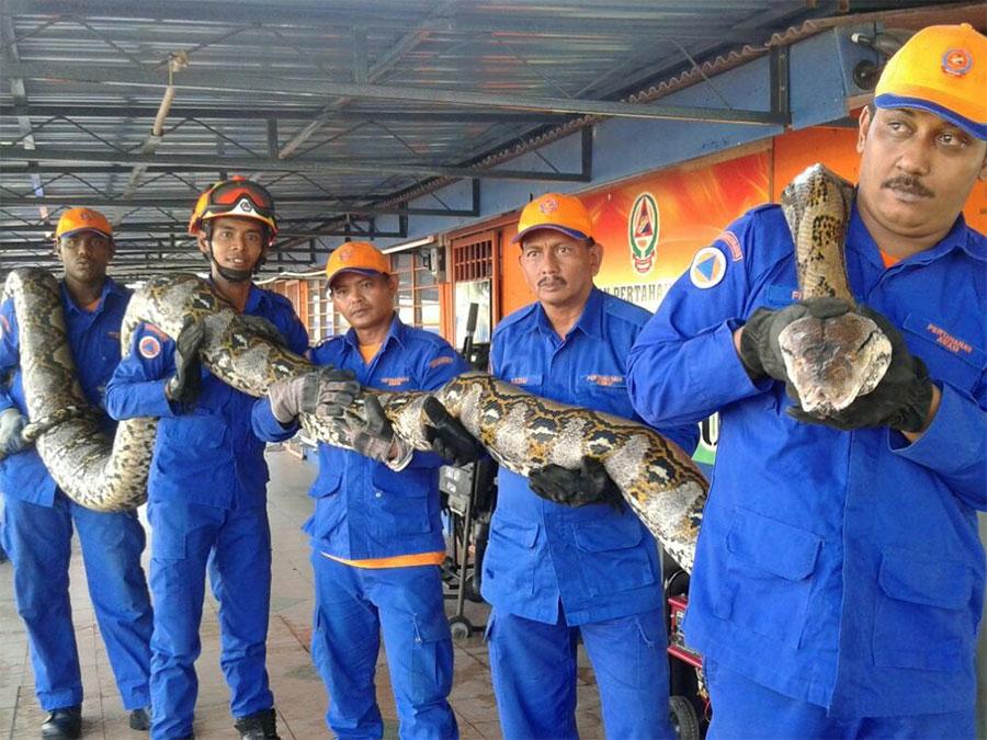 Python-Malaysia