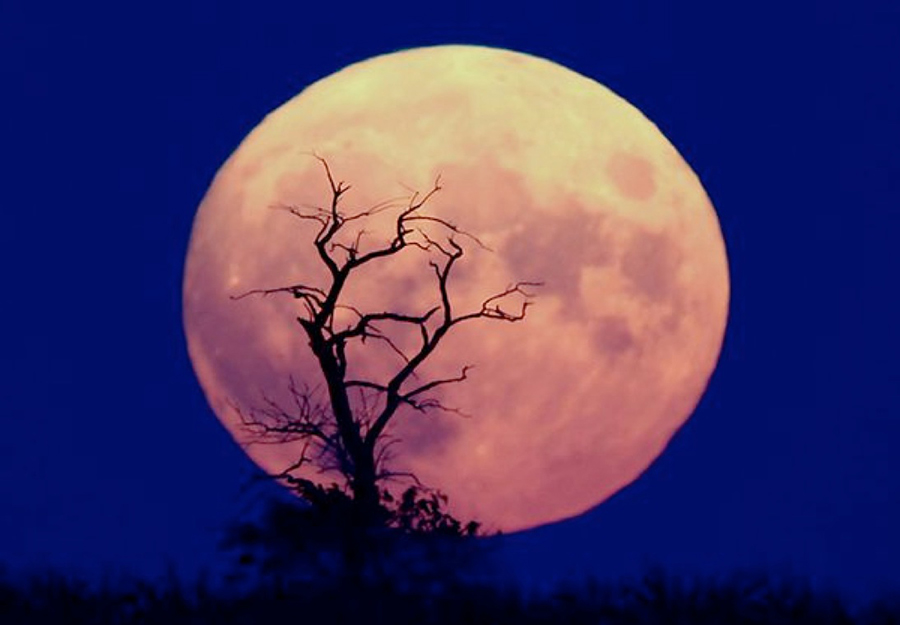 Skywatchers will be able to enjoy the 'Pink moon rising ...