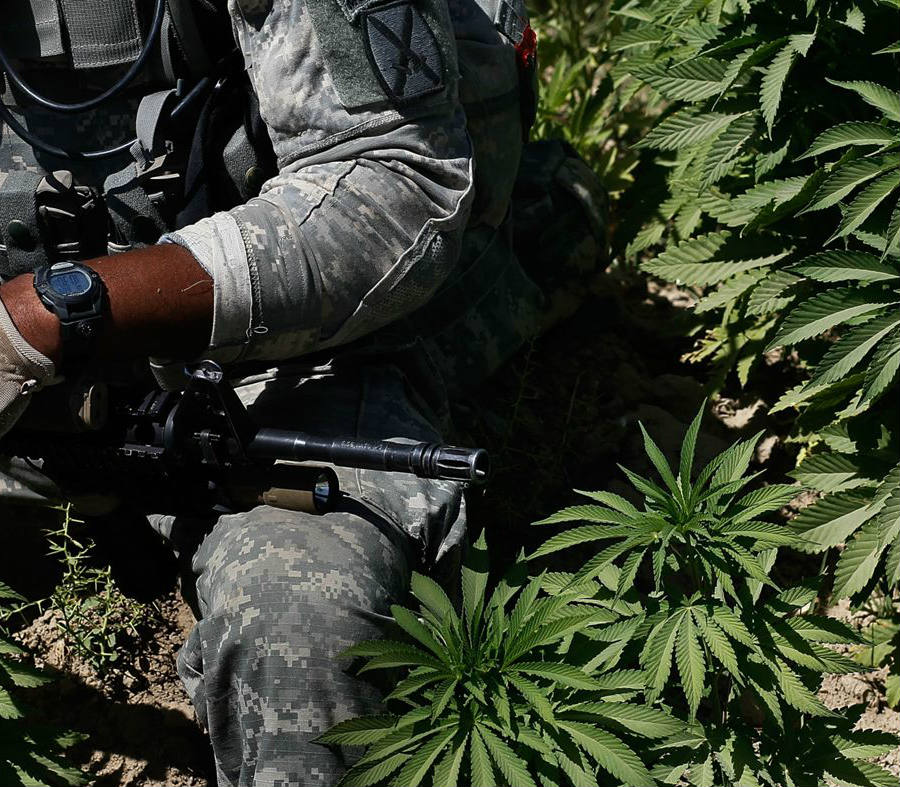 U.S. veterans will soon be able to have greater access to medical marijuana in states where it is legal thanks to the study approved by the DEA. Credit: Rolling Stone