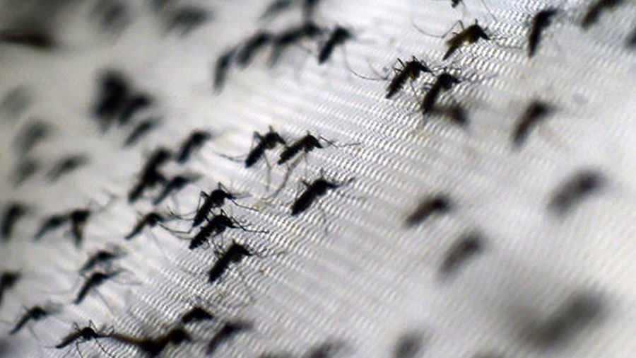 First-Zika-related-death-in-the-US