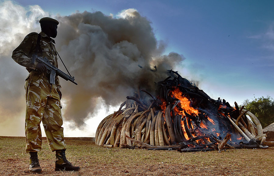 Kenya-Ivory-Burning