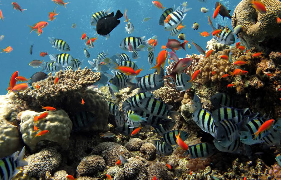 Florida Keys Reef