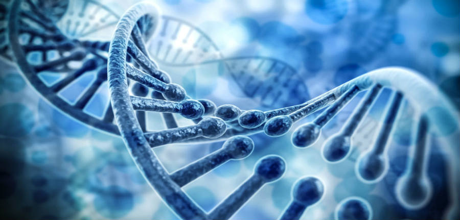 The study suggests that the genes work with the person's cognitive abilities and personalities, such as intellectual curiosity and persistence. Image Credit: Digital Genetics
