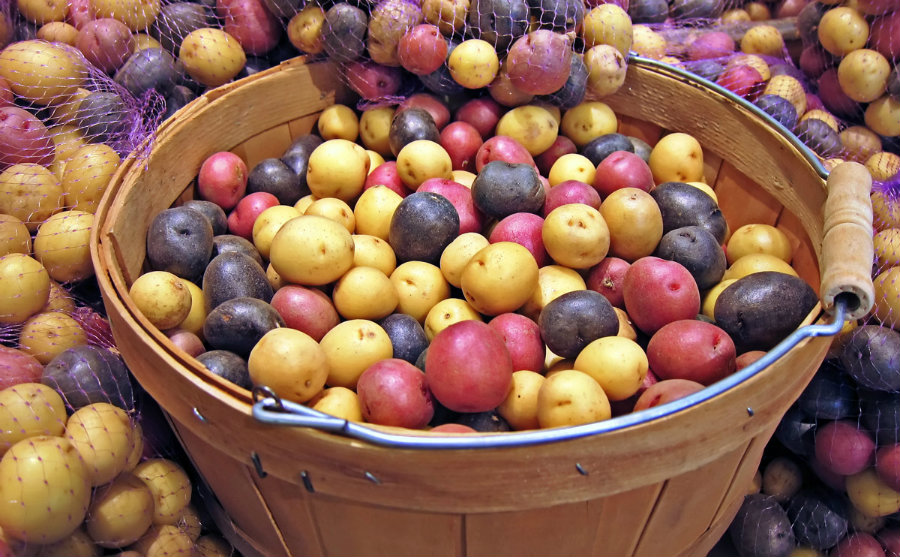 A new study carried out by specialists from Harvard says that there is a link between eating potatoes and having high blood pressure. Photo credit: Modern Farmer