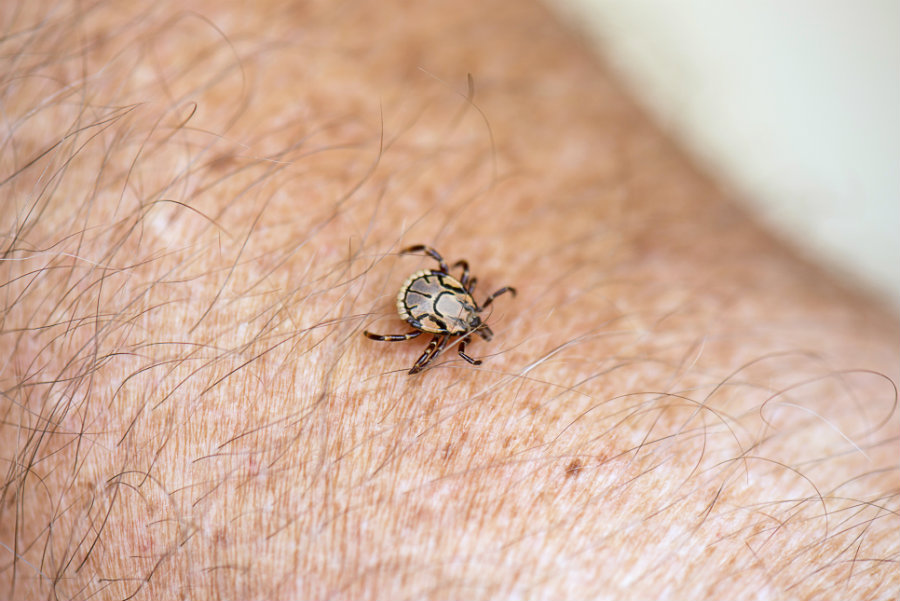 Authorities and health experts are providing necessary guidelines to prevent civilians from the Lyme disease. Photo credit: Allen County Department of Health