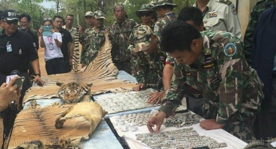 Thai army display a tiger skin found inside Tiger Temple, the controversial Buddhist temple. Image Credit: The Phucket News