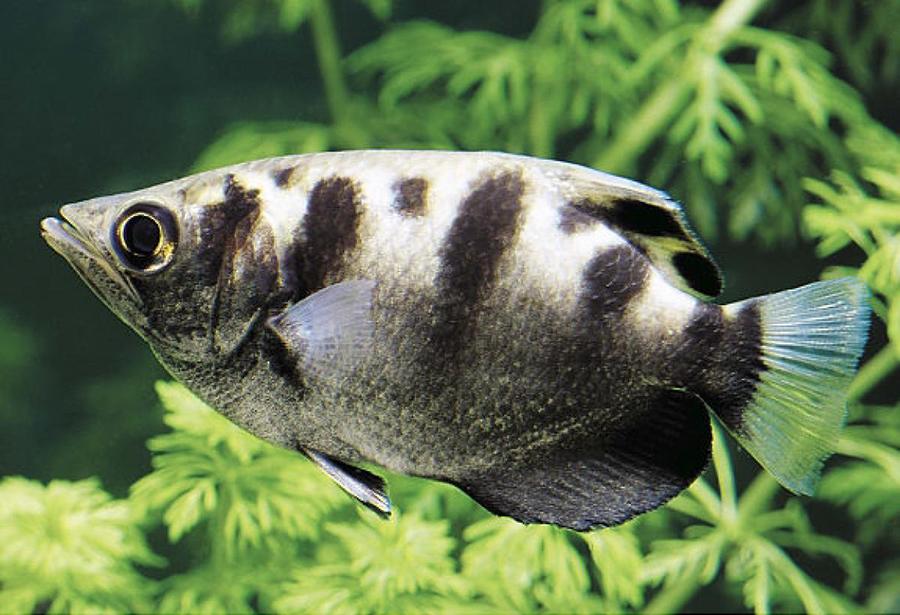 acherfish-facial-recognition