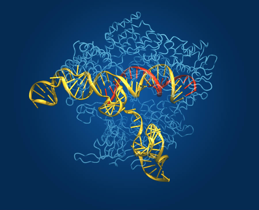 As seen above, a computerized rendering shows the Cas9 gene-editing enzyme