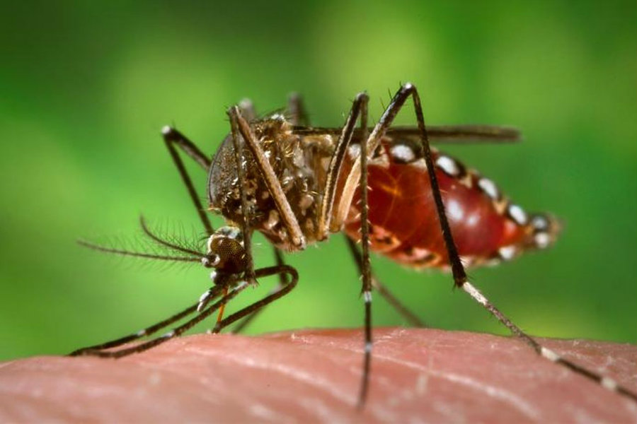 A female laboratory researcher at the University of Pittsburgh returned to work after contracting the Zika virus and marking the first case of an infection in a lab, The New York Times reported. Photo credit: James Gathany / Wikimedia Commons / The Verge