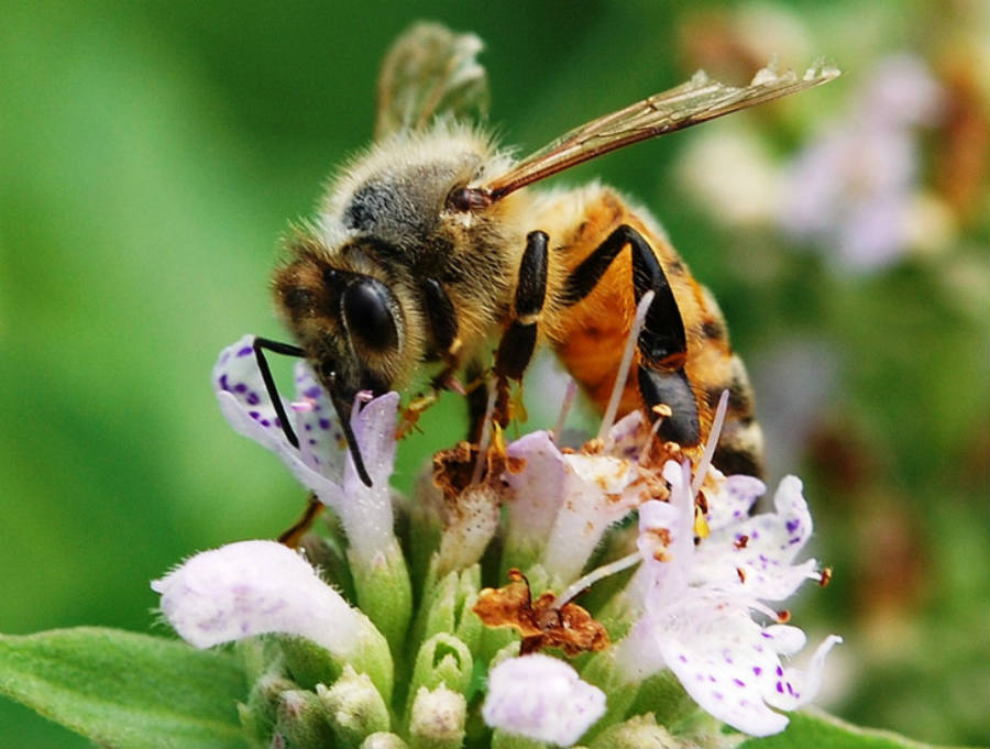Extreme weather is harmful to bees. Harsher rains make it, so bees refrain from leaving the colony, while intense heat leads them to look for water to acclimate the colony. Image Credit: Inhabitat