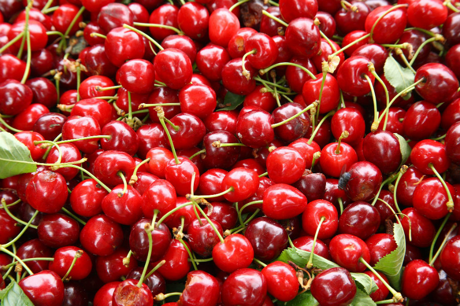 Cherries are delicious, nutritious fruits commonly known for their antioxidant qualities. They were brought to the modern-day United States by settlers in the 1600's. Photo credit: Pamper.My