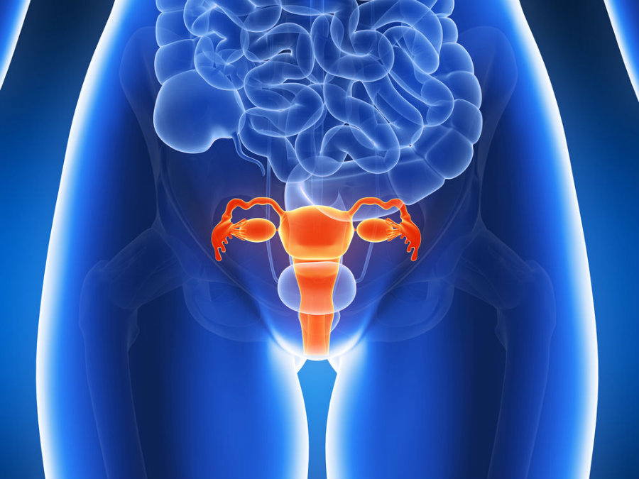 Researchers have confirmed that breast cancer gene BRCA1 plays a significant role in higher risks for uterine cancer. Image Credit> News Clip