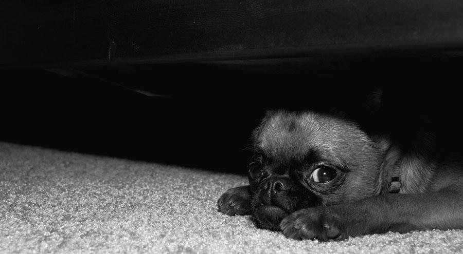 dog_anxious