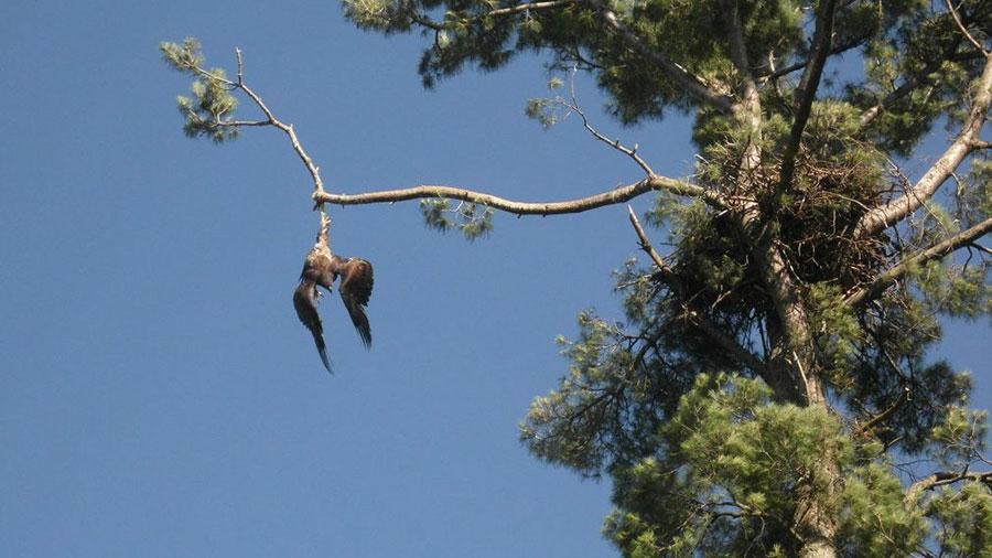 bold-eagle-veteran