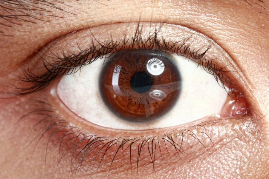 Thanks to studies such as the one recently published in the journal Nature, regrown brain cells could (in the near future) help blind people regain their sight. Image Credit: Medical Daily