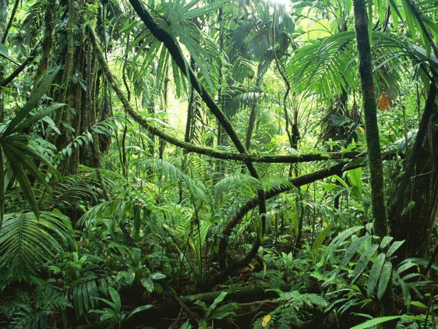 In addition, about 4,000 of the rarest Amazonian trees remained to be discovered and described, commented study leader Nigel Pitman, The Field Museum's Mellon Senior Conservation Ecologist. Image Credit: Found The World
